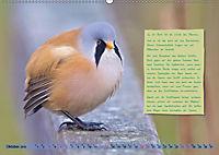 Steckbriefe einheimischer Vögel (Wandkalender 2019 DIN A2 quer) - Produktdetailbild 10