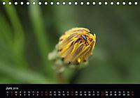 Stille Wunder der Natur (Tischkalender 2019 DIN A5 quer) - Produktdetailbild 6