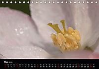 Stille Wunder der Natur (Tischkalender 2019 DIN A5 quer) - Produktdetailbild 5