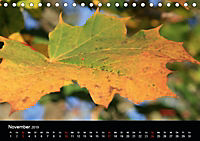 Stille Wunder der Natur (Tischkalender 2019 DIN A5 quer) - Produktdetailbild 11