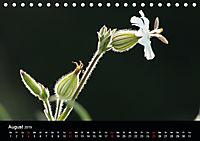 Stille Wunder der Natur (Tischkalender 2019 DIN A5 quer) - Produktdetailbild 8