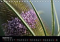 Stille Wunder der Natur (Tischkalender 2019 DIN A5 quer) - Produktdetailbild 9
