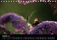 Stille Wunder der Natur (Tischkalender 2019 DIN A5 quer) - Produktdetailbild 10