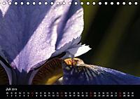 Stille Wunder der Natur (Tischkalender 2019 DIN A5 quer) - Produktdetailbild 7