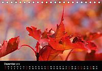Stille Wunder der Natur (Tischkalender 2019 DIN A5 quer) - Produktdetailbild 12