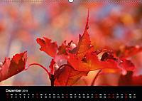 Stille Wunder der Natur (Wandkalender 2019 DIN A2 quer) - Produktdetailbild 12