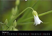 Stille Wunder der Natur (Wandkalender 2019 DIN A2 quer) - Produktdetailbild 2