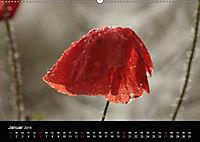 Stille Wunder der Natur (Wandkalender 2019 DIN A2 quer) - Produktdetailbild 1
