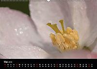 Stille Wunder der Natur (Wandkalender 2019 DIN A2 quer) - Produktdetailbild 5
