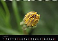 Stille Wunder der Natur (Wandkalender 2019 DIN A2 quer) - Produktdetailbild 6