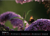 Stille Wunder der Natur (Wandkalender 2019 DIN A2 quer) - Produktdetailbild 10