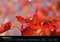 Stille Wunder der Natur (Wandkalender 2019 DIN A3 quer) - Produktdetailbild 12