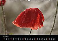 Stille Wunder der Natur (Wandkalender 2019 DIN A3 quer) - Produktdetailbild 1