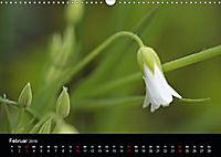 Stille Wunder der Natur (Wandkalender 2019 DIN A3 quer) - Produktdetailbild 2