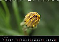 Stille Wunder der Natur (Wandkalender 2019 DIN A3 quer) - Produktdetailbild 6
