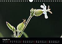 Stille Wunder der Natur (Wandkalender 2019 DIN A4 quer) - Produktdetailbild 8