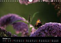 Stille Wunder der Natur (Wandkalender 2019 DIN A4 quer) - Produktdetailbild 10