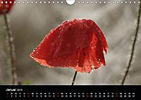 Stille Wunder der Natur (Wandkalender 2019 DIN A4 quer) - Produktdetailbild 1