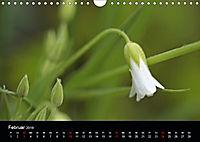 Stille Wunder der Natur (Wandkalender 2019 DIN A4 quer) - Produktdetailbild 2