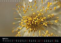 Stille Wunder der Natur (Wandkalender 2019 DIN A4 quer) - Produktdetailbild 4