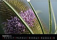 Stille Wunder der Natur (Wandkalender 2019 DIN A4 quer) - Produktdetailbild 9