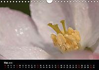 Stille Wunder der Natur (Wandkalender 2019 DIN A4 quer) - Produktdetailbild 5