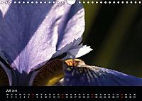 Stille Wunder der Natur (Wandkalender 2019 DIN A4 quer) - Produktdetailbild 7