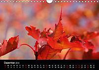 Stille Wunder der Natur (Wandkalender 2019 DIN A4 quer) - Produktdetailbild 12