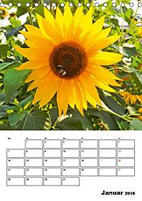 Strahlende Sonnenblumen (Tischkalender 2019 DIN A5 hoch) - Produktdetailbild 1
