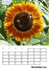 Strahlende Sonnenblumen (Tischkalender 2019 DIN A5 hoch) - Produktdetailbild 11