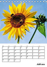 Strahlende Sonnenblumen (Tischkalender 2019 DIN A5 hoch) - Produktdetailbild 7