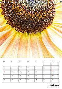 Strahlende Sonnenblumen (Tischkalender 2019 DIN A5 hoch) - Produktdetailbild 6