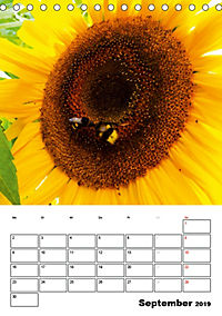 Strahlende Sonnenblumen (Tischkalender 2019 DIN A5 hoch) - Produktdetailbild 9