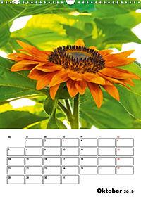 Strahlende Sonnenblumen (Wandkalender 2019 DIN A3 hoch) - Produktdetailbild 10