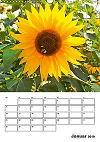 Strahlende Sonnenblumen (Wandkalender 2019 DIN A3 hoch) - Produktdetailbild 1