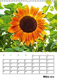 Strahlende Sonnenblumen (Wandkalender 2019 DIN A3 hoch) - Produktdetailbild 3