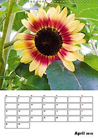 Strahlende Sonnenblumen (Wandkalender 2019 DIN A3 hoch) - Produktdetailbild 4