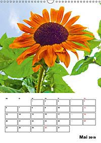 Strahlende Sonnenblumen (Wandkalender 2019 DIN A3 hoch) - Produktdetailbild 5