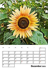 Strahlende Sonnenblumen (Wandkalender 2019 DIN A3 hoch) - Produktdetailbild 12
