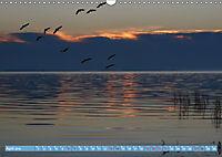 Stralsund und die Boddenlandschaft (Wandkalender 2019 DIN A3 quer) - Produktdetailbild 4