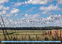 Stralsund und die Boddenlandschaft (Wandkalender 2019 DIN A3 quer) - Produktdetailbild 7
