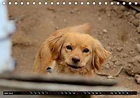 Straßenhunde 2019 (Tischkalender 2019 DIN A5 quer) - Produktdetailbild 6