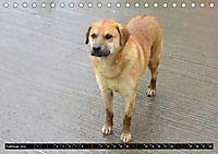 Straßenhunde 2019 (Tischkalender 2019 DIN A5 quer) - Produktdetailbild 2