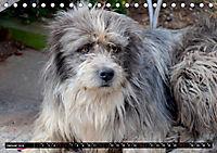 Straßenhunde 2019 (Tischkalender 2019 DIN A5 quer) - Produktdetailbild 1