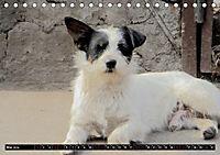 Straßenhunde 2019 (Tischkalender 2019 DIN A5 quer) - Produktdetailbild 5