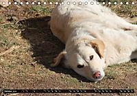 Straßenhunde 2019 (Tischkalender 2019 DIN A5 quer) - Produktdetailbild 10