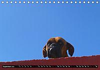 Straßenhunde 2019 (Tischkalender 2019 DIN A5 quer) - Produktdetailbild 9