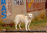 Straßenhunde 2019 (Tischkalender 2019 DIN A5 quer) - Produktdetailbild 8