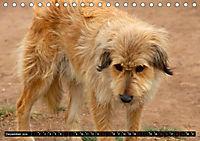 Straßenhunde 2019 (Tischkalender 2019 DIN A5 quer) - Produktdetailbild 12