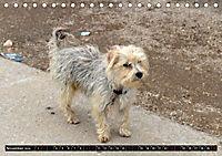 Straßenhunde 2019 (Tischkalender 2019 DIN A5 quer) - Produktdetailbild 11